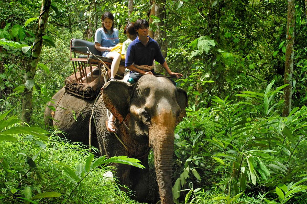 Elephant trekking tour, Phuket
