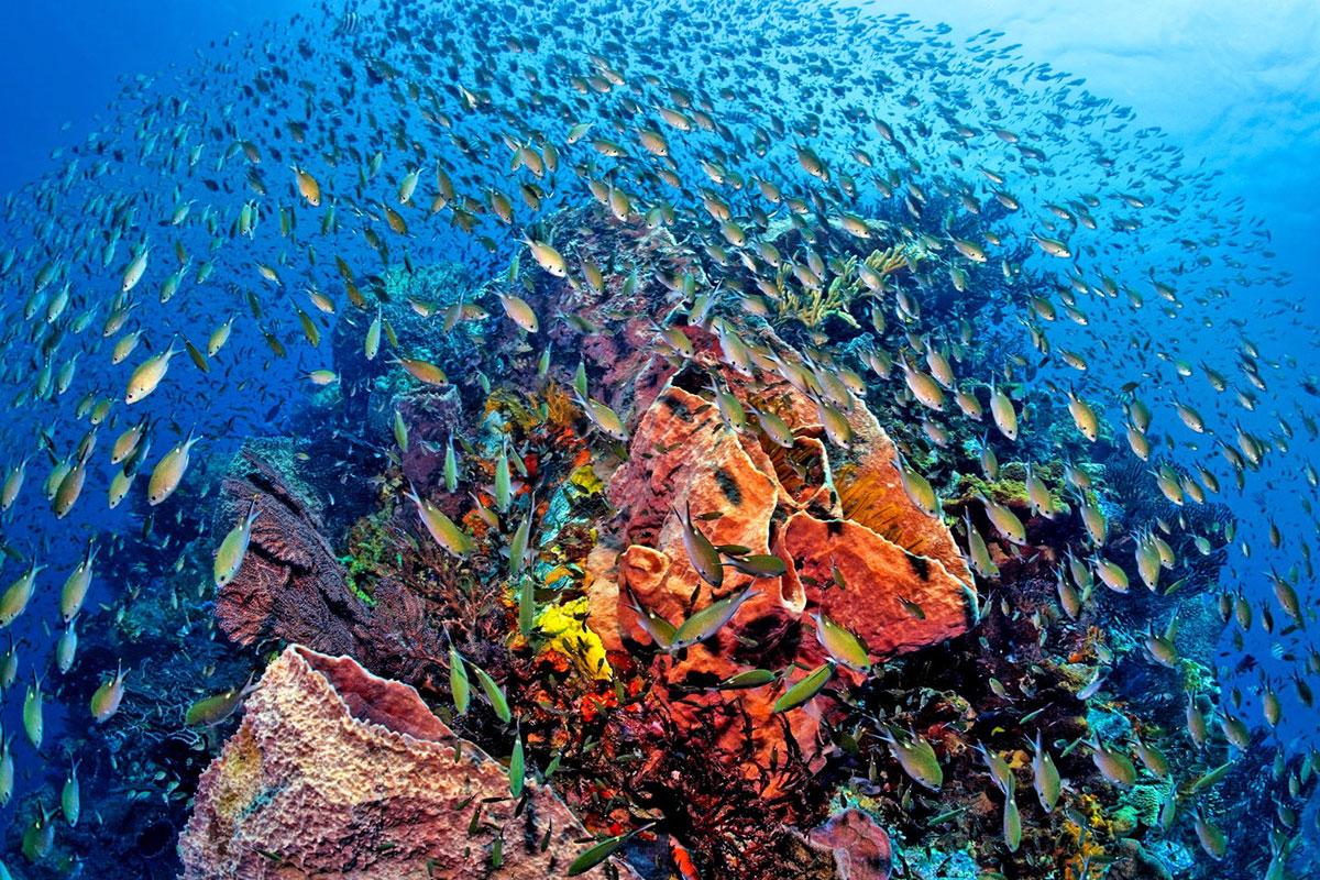 Similan islands tour