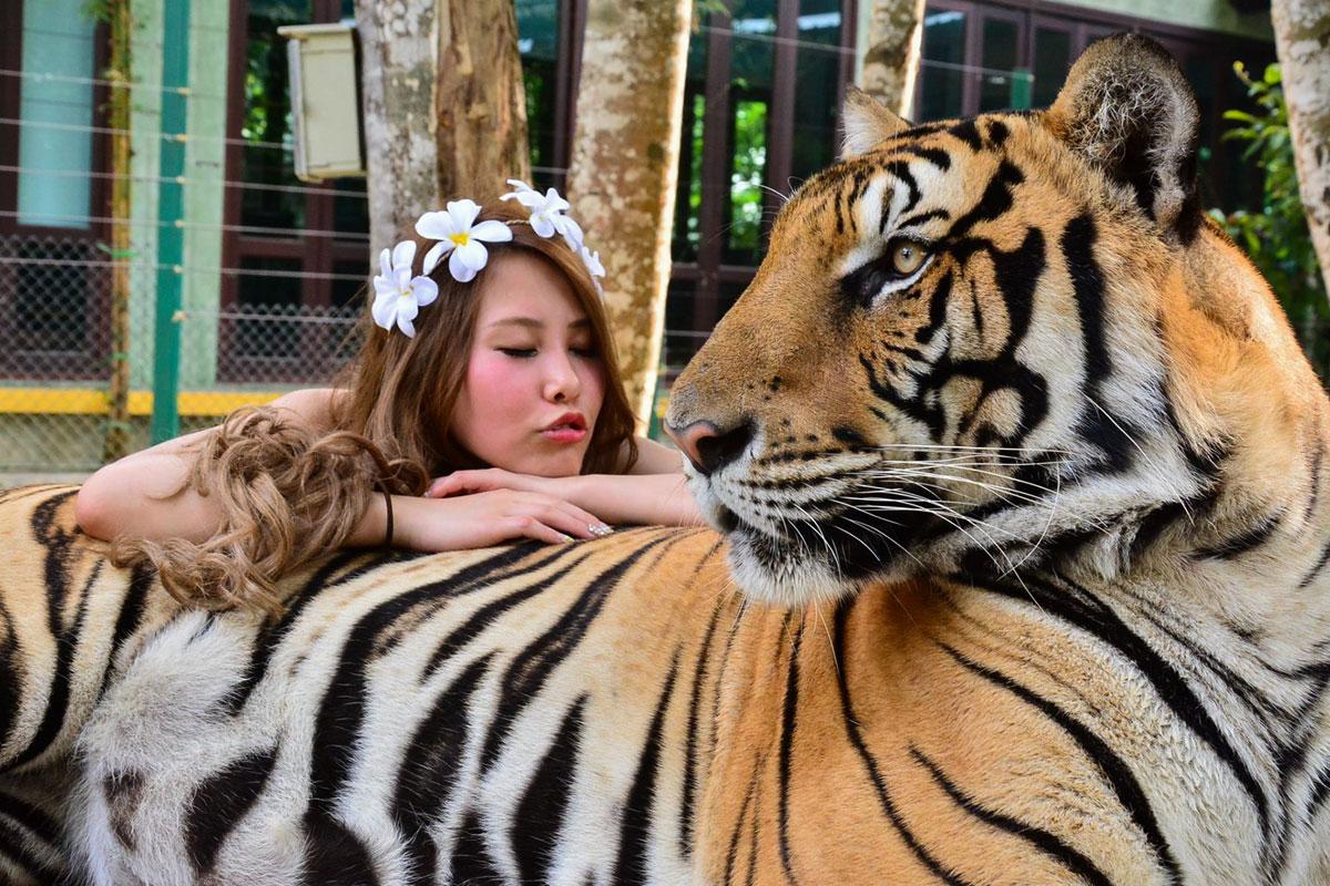 Tiger Kingdom, Kathu, Phuket